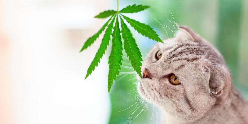 CBD für Haustiere Vorteile