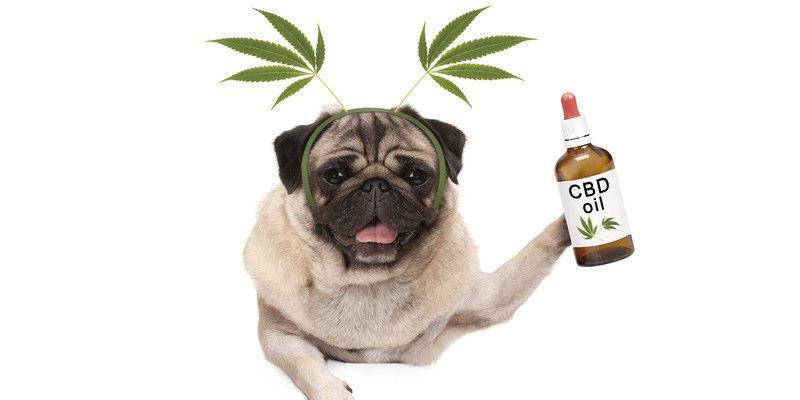 CBD für Hunde