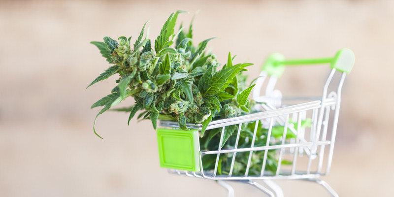 Cannabis – In Deutschland erhältliche Sorten