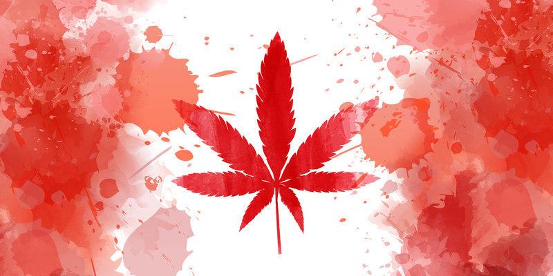 Cannabis in Kultur und Medizin vom Altertum bis heute