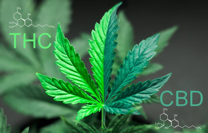 Unterschiede THC und CBD