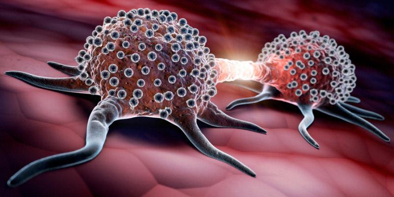 Was ist eigentlich Krebs - teilende Krebszellen - Mitose
